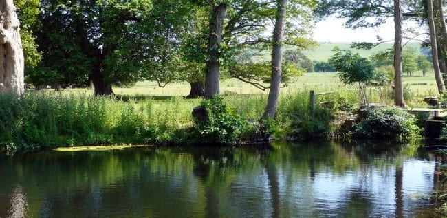Renovation of Firle Park Stew Ponds